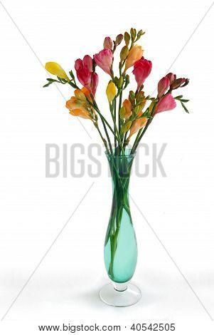 posy of multicolor fresias