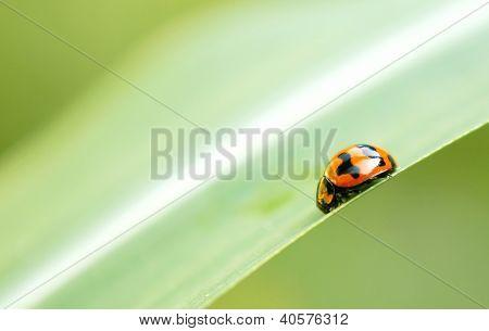 Close Up Of Lady Bird