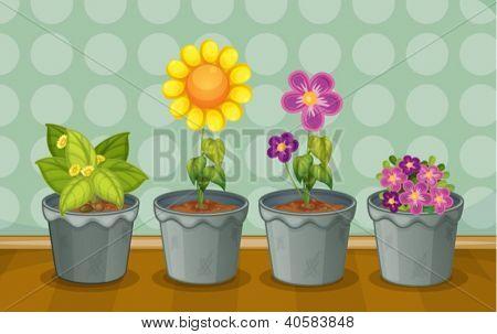 Abbildung von verschiedenen Topfpflanzen auf einem Holzfußboden
