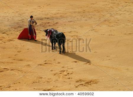 Torero And Bull