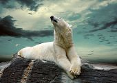 stock photo of snow clouds  - White Polar Bear Hunter on the Ice in water drops - JPG
