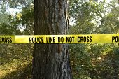 stock photo of kidnapped  - Crime scene in the forest - JPG