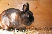 pic of rabbit hutch  - Bella the rabbit enjoying some sun in her hutch - JPG