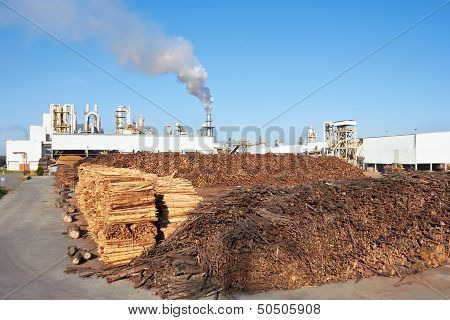 Wood Against Paper Factory