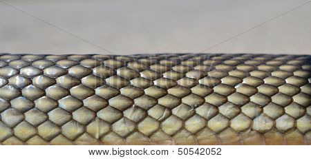 Snake Skin Abstract Background