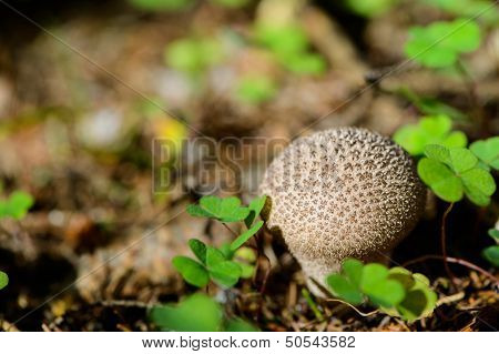 Russia. Nature And The Forest. Fresh Mushrooms