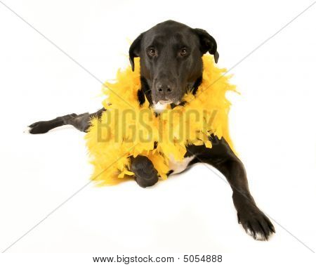 Dog Wearing Feather Boa