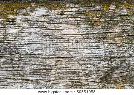 Wooden Plank With Moss