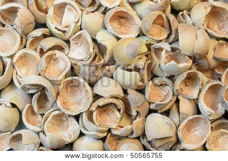 Hazel nuts shells background