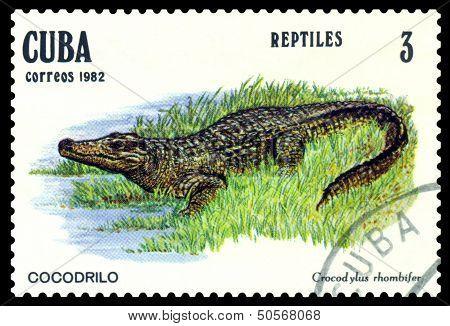 Vintage  Postage Stamp. Crocodylus Rhombifer.