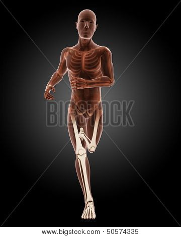 3D render of a running male medical skeleton