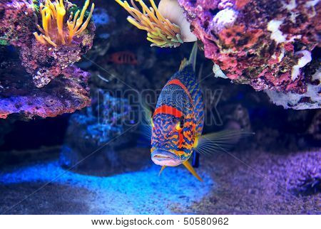 Exotic colorful fish among rocks with corals on the bottom in famous aquarium of Monaco.
