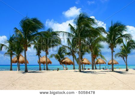 Palm Trees, Mexico