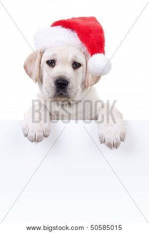 Christmas Labrador puppy dog in santa hat holding up white sign or banner