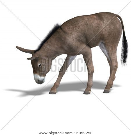 Donkey Render