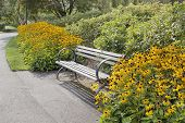 picture of black-eyed susans  - Park Bench Along Garden Path with Black - JPG