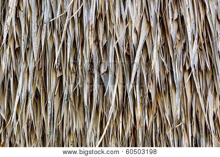 Straw Dry Background.