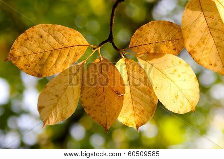 Autumn  Wilted Leaves