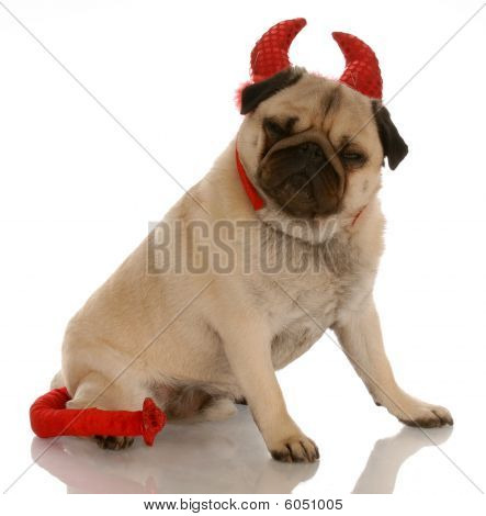 Pug Dressed As A Devil