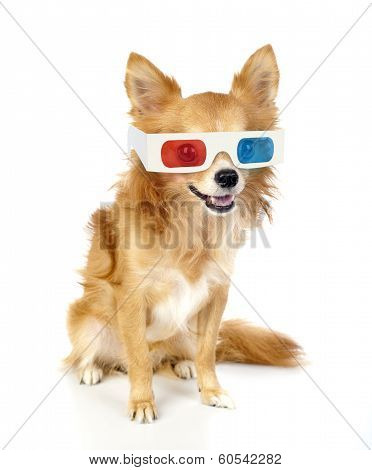 Red chihuahua dog with 3d glasses isolated on white