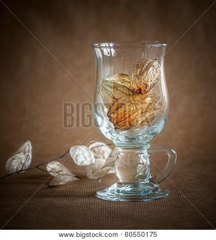 Physalis in glass vase