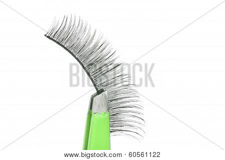 False Lashes And Green Pincers