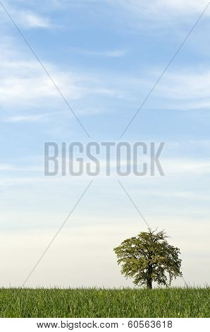 Tree Alone With Large Sky Vertical