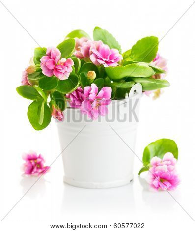 Spring flowers in bucket. Isolated on white background
