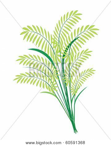 Cereal Plants Or Ferns Leaves On White Background