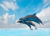 image of bottlenose dolphin  - group of jumping dolphins - JPG