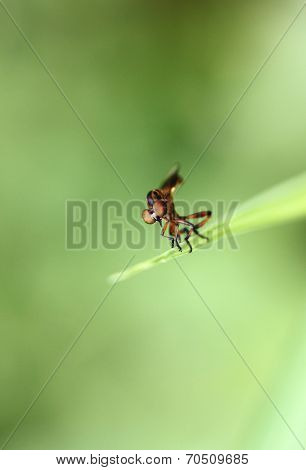 Small Dragonflies On Green Leaf.