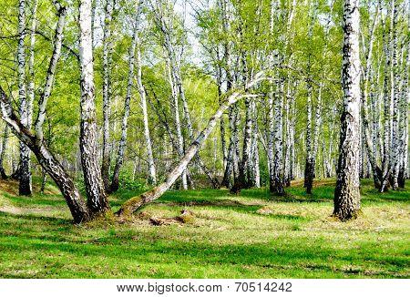 Spring plots