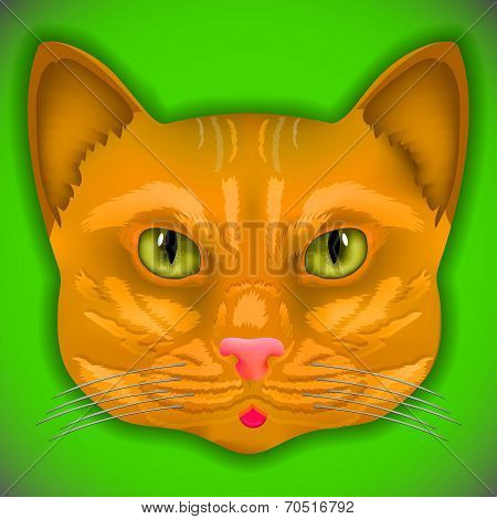 cat face eyes vector kitten bow hair facial portrait