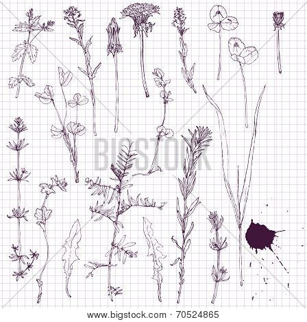set of line drawing flowers and grass