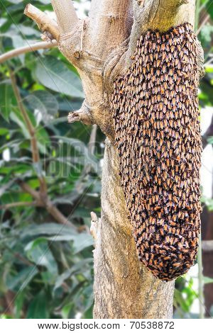 Swarm Of Honey Bee  On Tree
