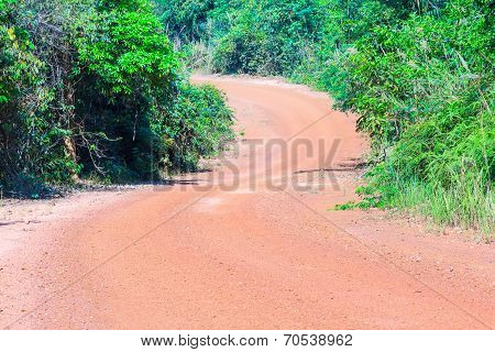 Road In Asian Forest