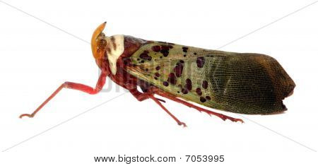 Treehopper With Clipping Path