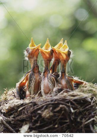 wildlebende Vogelarten
