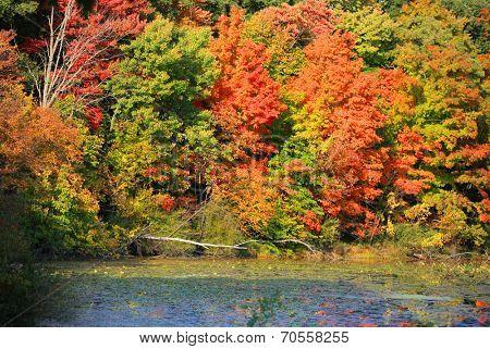 Bright autumn trees in Kensington metro park