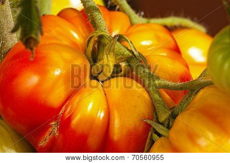 Close-up Of Large Beefsteak Tomatoes