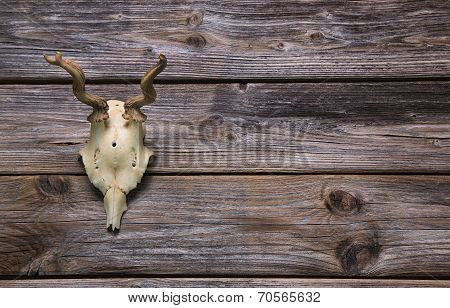 Antler Or Horn On Wooden Background. Hunting Trophy.