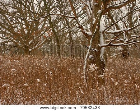 Midwest Winter Forest Scene