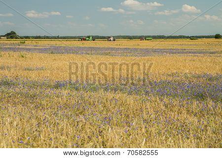 Grow Wheat