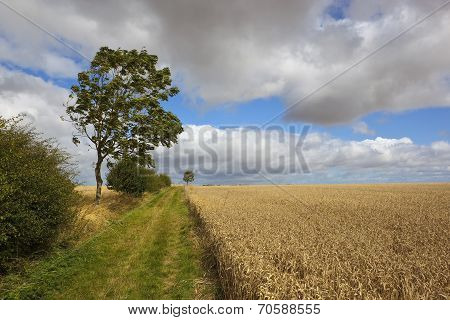 Wind Blown Summer Landscape