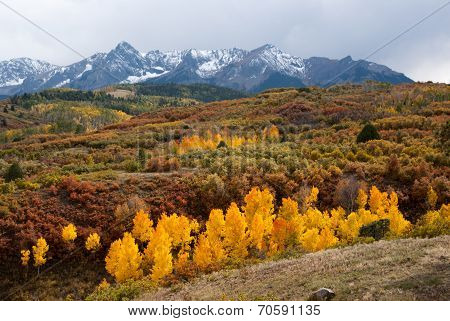Last Color Of Fall In Colorado Mountains