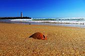stock photo of faro  - Shell on the sand of Praia de Faro, Portugal, Algarve ** Note: Shallow depth of field - JPG