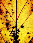 Grunge Yellow Leaf Background