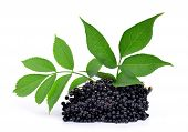 foto of elderberry  - Elderberry  - JPG