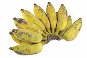 picture of banana  - Bananas Cultivated Banana Thai cultivated banana Thai bananas on on white background - JPG