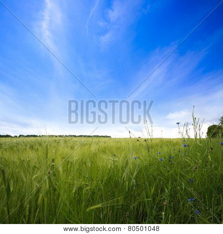 Green meadow under sky with clouds